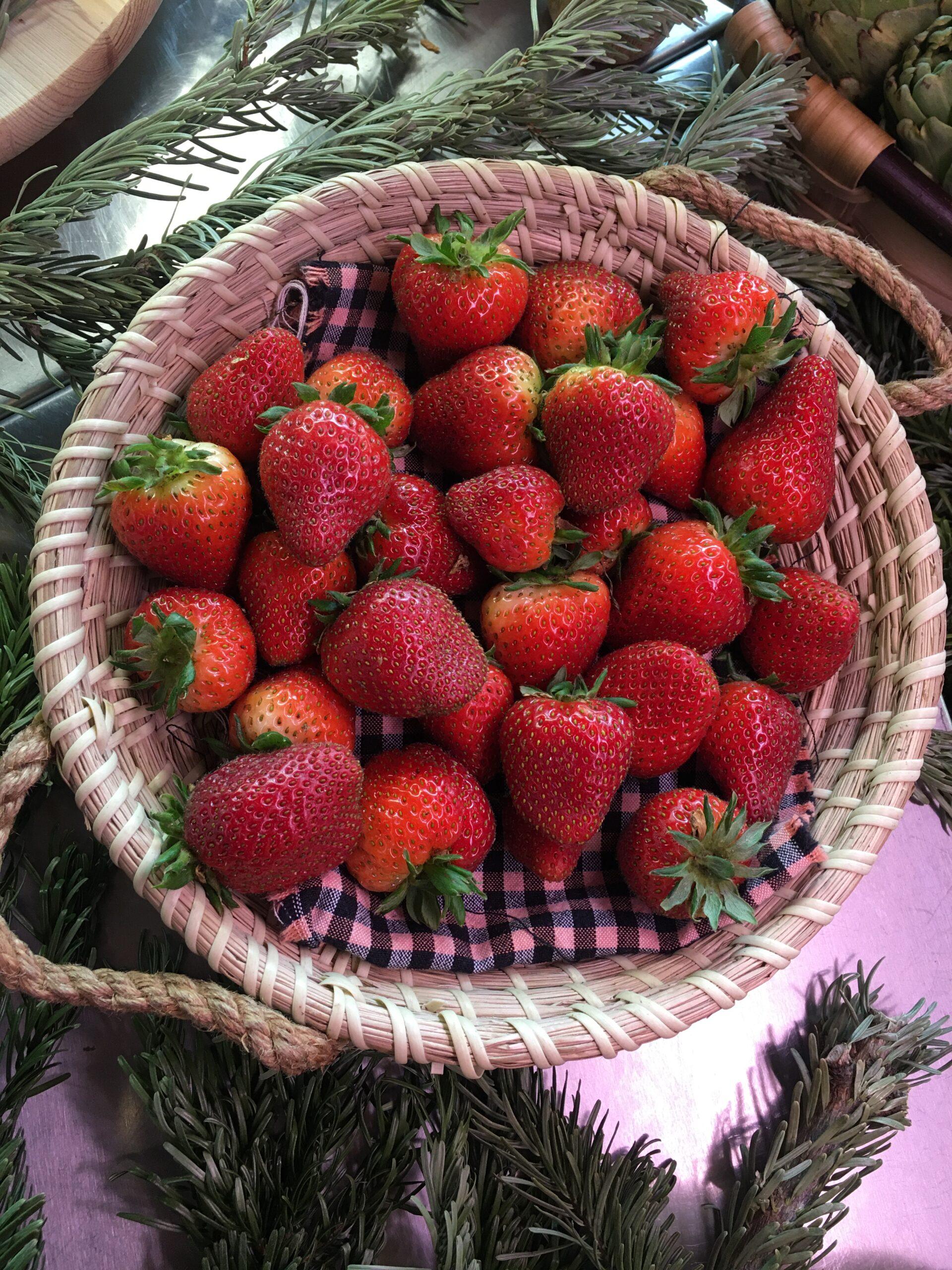 fresas 1
